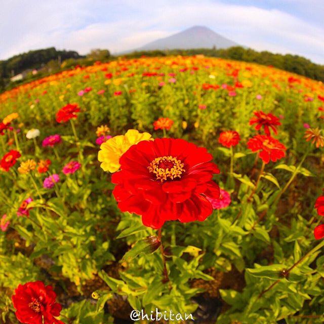 お花と富士山♪